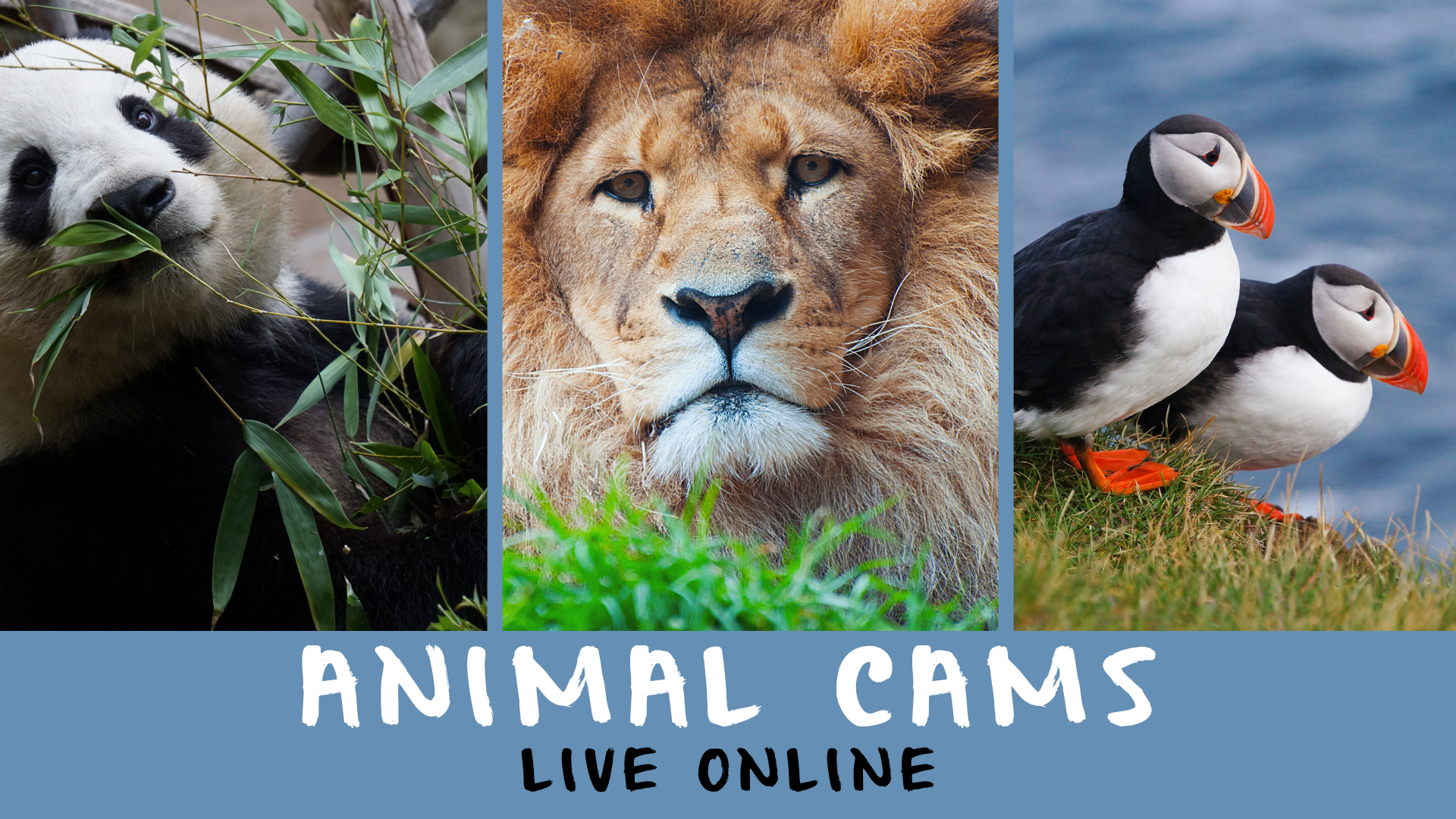 Animal Cams Online